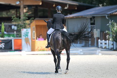 IMG_7749 (dreiwn) Tags: dressage dressur dressuur pferd reitturnier turnierreiten pferdesport horse horseback horseriding equestrian reitverein dressurprfung kandare doublebridle reiten pferde reitplatz ridingarena