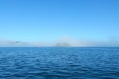 Plymouth-201605-45-Fog-DrakeIsland (Tony J Gilbert) Tags: plymouth marine macro underwater diving nikond300 handdeeps jameseaganlayne hilseapointrocks scylla ceeking wwwdivingplymouthcom