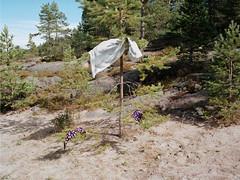 Trysunda (magastrom) Tags: 645 film analog mamiya mamiya645af mamiyasekoraf55mmf28 kodakportra160 vuescan epson v700 landscape hgakusten highcoast trysunda sweden