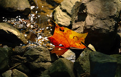 Welcome, Autumn! (Sky_PA) Tags: autumn fall lightandshadow leaf orange amateurphotography rocks water canon canoneos t6i rebelt6i nature colorful inspiredbylove outdoor pennsylvania lebanon equinox