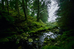 The Secret Place (Costigano) Tags: stream water brook river scenic scenery outdoor forest woods woodland wicklow ireland irish green trees canon eos