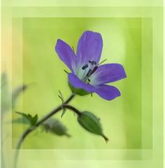 (elfinor) Tags: flowers blomster kreative garden hage outdors sverige vrmland sffle elfinor hst autumn
