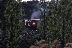Through the trees (Bingley Hall) Tags: rail railway railroad transport train transportation trainspotting locomotive engine diesel clydeengineering emd australia southaustralia overland nairne