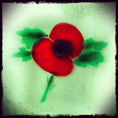 A Poppy For You