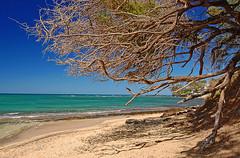 Deserted Shores (jcc55883) Tags: ocean shadow sea hawaii sand nikon oahu pacificocean shore beachroad yabbadabbadoo d40 kaalawai diamondheadbeachpark nikond40 diamondheadroad kuileicliffs