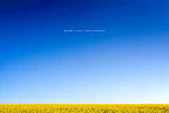 Canola fields, Eyre Peninsula, Australia (Robert Lang Photography) Tags: ranch blue color colour yellow horizontal rural farm horizon farming stock australia bluesky nopeople simplicity fields agriculture simple canola eyrepeninsula canolafields