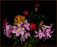 AUGURI, Laura...... (leon.calmo) Tags: laura canon fiori compleanno hdr auguri eos50d omaggiofloreale leoncalmo flowerthequietbeauty