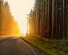 sun gets in your eyes (-liyen-) Tags: vancouverisland ucluelettotofino road highway sunset sun glaretrees britishcolumbia bc westcoast fujifilmx100 x100 challengeyouwinner