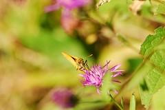 (texaskim81 **busy**) Tags: macro colors natura dettagli colori farfalla