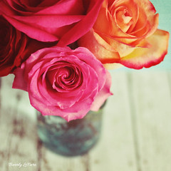 beloved (life stories photography) Tags: flowers roses stilllife nature square september 2012 woodtable