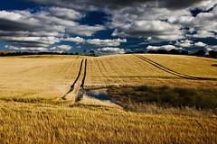 Scotland fields 02