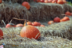 1Day-trip-Jim-Thompson-Farm&Dasada-Gallery_E12663461-011