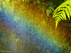 Arco-ris (Marney Queiroz) Tags: color nature cores do natureza foz iguacu colorido queiroz marney panasonicfz35 marneyqueiroz