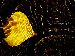 La perfecta alquimia, convertir en oro todo lo que se toca...  o se fotografía. /Eloy Sánchez) (Bernardo del Palacio) Tags: flowers blue naturaleza reflection verde reflections photographer screensaver maria quality catedral ciudad textures leon nubes reflejo otoño awards reflexions león reflejos autunm naturesfinest blueribbonwinner reflejada 5photosaday cloks thursdaywalk fantasticflower abigfave platinumphoto anawesomeshot superbmasterpiece diamondclassphotographer theunforgettablepictures betterthangood goldstaraward academyofphotographyparadiso qualitypixels musacmuseo flickrlovers