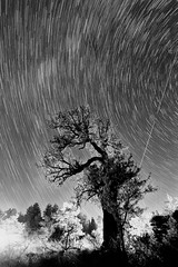 In rush reality [explored 25-9-2012] (ChrisBrn) Tags: plants tree silhouette backlight night stars trails nightsky startrails