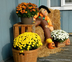 Stockertown, PA (Peachhead (5,000,000 views!)) Tags: fall autumn seasonal porch display mainstreet pa115 sullivantrail stockertownpa northamptoncounty pa pennsylvania automne otono herbst autunno mums chrysanthemum scarecrow jackolantern pumpkin lehighvalley nepa eastonwilkesbarreturnpike old road highway turnpike northeastpennsylvania flower bloom blossom blume fiore flor fleur oldhighway oldroad decommissioned