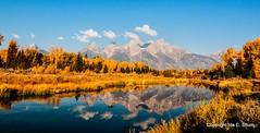 Fall at Schwabacher Landing (idashum) Tags: fall nature landscape nationalpark nikon fallcolors jackson fallfoliage grandtetons ida grandteton jacksonhole shum grandtetonnationalpark d300 idashum idacshum idacshumphotography