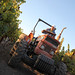 2012 Dilworth Cabernet Harvest 0008