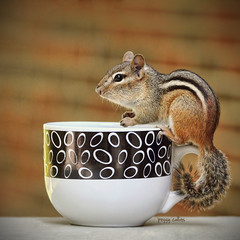 Join me in a cup of coffee? (Peggy Collins) Tags: blackandwhite brick cup coffeecup circles stripes tail chipmunk mug coffeemug chipper latte gettyimages chipmunks brickbackground brickbokeh lattemug circlesandstripes peggycollins