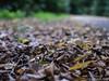 Herbst 18.09.2012
