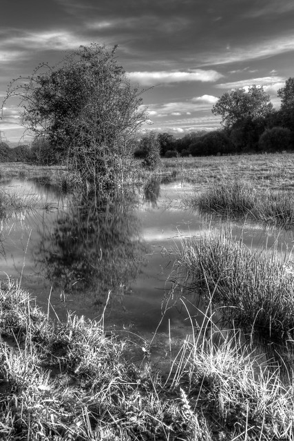 Flooded Field, Sherfield On Loddon
