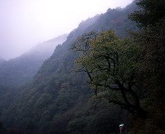 rain in hill (tuolegemajia) Tags: china mountain color 120 mamiya film nature fuji medium kl provia legacy rb67  12735 shenlongjia gtx970