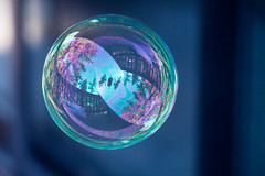 Bubble (TomFalconer) Tags: reflection forest soap sphere bubble