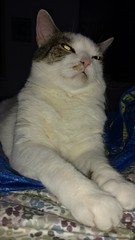 Mog-o-Rama 2016 (The All-Nite Images) Tags: cats animals kitties mogs ottoyamamoto mogorama theallniteimages