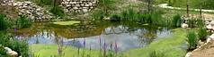 Pice d'eau au naturel (Diegojack) Tags: nikon nikonpassion d7200 garenne levaud parc animalier panorama plandeau fleurs paysages