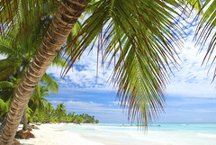 Anyone willing to sp... (SeavisTours) Tags: beach wild tropical palm vacation caribbean ocean travel sand nature tree sea atlantic dominicanrepublic blue water sky coastline summer destinations outdoors scenic idyllic island nobody turquoise seascape cloud edge horizon wave landscape