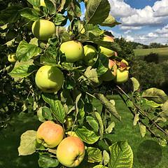 Erntezeit - harvest time (victorlaszlo73) Tags: ernte harvest mecklenburgvorpommern sommer summer sunny sonnig wolkig cloudy carlsdorf