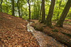 Wonderful water stream in the forest (Jessie van Weert) Tags: wideangle wonderful warm wide explore extreme extreem trees tree yellow dynamic mysterious dynamisch uitzicht outdoor outside sun sunshine summer interesting impressive incredible nikon d3100 nice orange photography plant plants adorable atmosphere sigma staatsbosbeheer depthoffield depth dof flickr fotografie fabulous field forest gorgeous green groothoek groen gelderland holland bijzonder landscape landschap light licht zon zomer view beautiful bomen beweging bos netherlands nature ngc natuur natuurgebied natuurmonumenten magical water