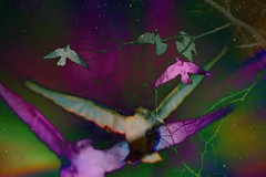 skycrow montage (~nevikk~) Tags: overprocessed saturation resized blended photoart kevinkelly invertedcolors crowsinflight