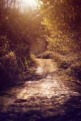 Strada facendo (Japo Garca) Tags: strada facendo cammino luce luz camino bosque fotografa retoque japo garca