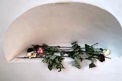 A Place For Meditation (YIP2) Tags: meditate meditation zen rose roses shriveled flower oudekerk