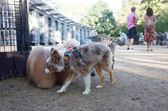 washington square park dog run (Charley Lhasa) Tags: ricohgrii grii 183mm 28mm35mmequivalent iso400 secatf28 0ev aperturepriority pattern noflash r009047 dng uncropped taken160820180757 uploaded160831211129 2stars flagged adobelightroomcc201561 lightroomcc201561 adobelightroom lightroom charley charleylhasa lhasaapso dog dogs washingtonsquareparkdogrun dogrun bigdogrun washingtonsquarepark wsp nycparks citypark urbanpark greenwichvillage manhattan newyorkcity nyc newyork ny tumblr160831 httpstmblrcozpjiby2bvcidn