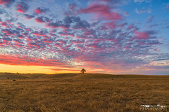 Master of Light - Yolo County, California (Tactile Photo | Greg Mitchell Photography) Tags: loneoak landscape storm rollinghills evening clouds ranchmfield california oaktree lonetree yolo beautiful august yolocounty farm sunset color monday dunninganhills