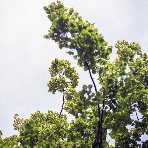 Summer branches - part 10
