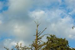 Drewniany piorurochron (Hejma (+/- 4500 faves and 1,5milion views)) Tags: polska rzekaprdnik drzewa drewno chmury krajobraz wiatocie