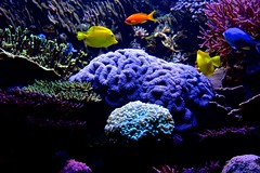 Deep Blues (Nanny Bean) Tags: bluethings thedeep hull aquarium coral tropicalfish