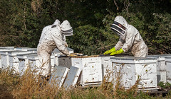 sweet harvest (ingridvg) Tags: bees hives beekeepers protection swarm harvest honey alberta sturgeoncounty beekeeping sweet boxes stings insects apiarist