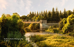 Walk with Me (RedHatGal: Barbara Butler/FireCreek Photography) Tags: kernriver hartpark kerncounty drought bridge landscape outdoor goldenhour warmlight trees marsh autumn fall california barbarabutlerphotography firecreekphotography redhatgal