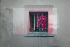 P9151790 (ddarenaa) Tags: color balance rich tones stone shot still nature morte dead plant green pink red purple cage window street photography photoshop photo metamorphosis symmetry avignon provence cote dazur seaside seashore edit white light sun experimental emotion emptiness colors conceptual contemporary concept modern art picture happy sad meaning