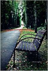 Be quiet (aria di vetro) Tags: street trees leaves foglie alberi garden little praha praga panchina