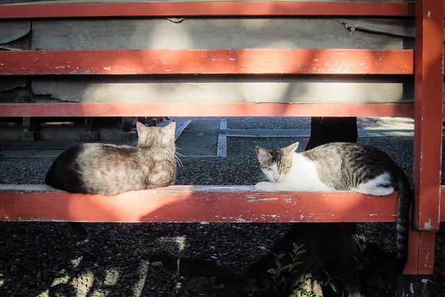 Today's Cat@2012-08-31