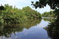 Mangroves (Wild Chroma) Tags: srilanka muthurajawela