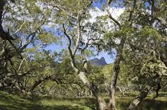 La plaine des tamarins (fred-dede) Tags: reunion des plaine tamarins