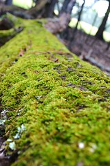 follow and adventure. (danimals!) Tags: tree green nature outdoors moss