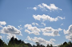 Fluffy castles in the sky (sunshine-solana) Tags: cloudscapes