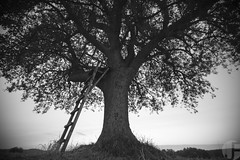 single tree (fotografieloft.de) Tags: summer sky blackandwhite tree nature grass landscape outdoors sommer natur himmel backgrounds gras landschaft baum hintergrund schwarzweis struktureffekt texturedeffect ausenaufnahme